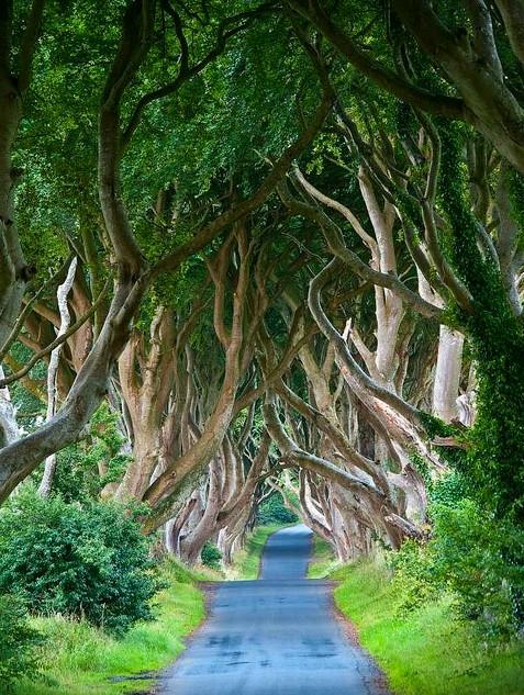 The Dark Hedges. Norte de Irlanda